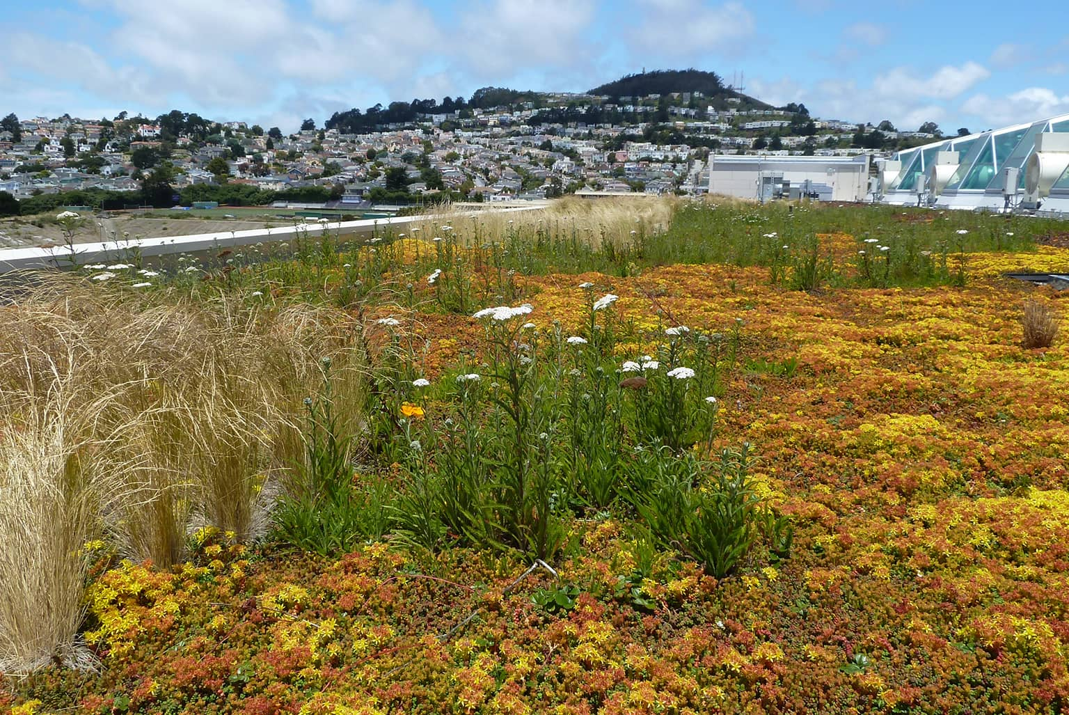 City College of San Francisco Joint Use Living Roof