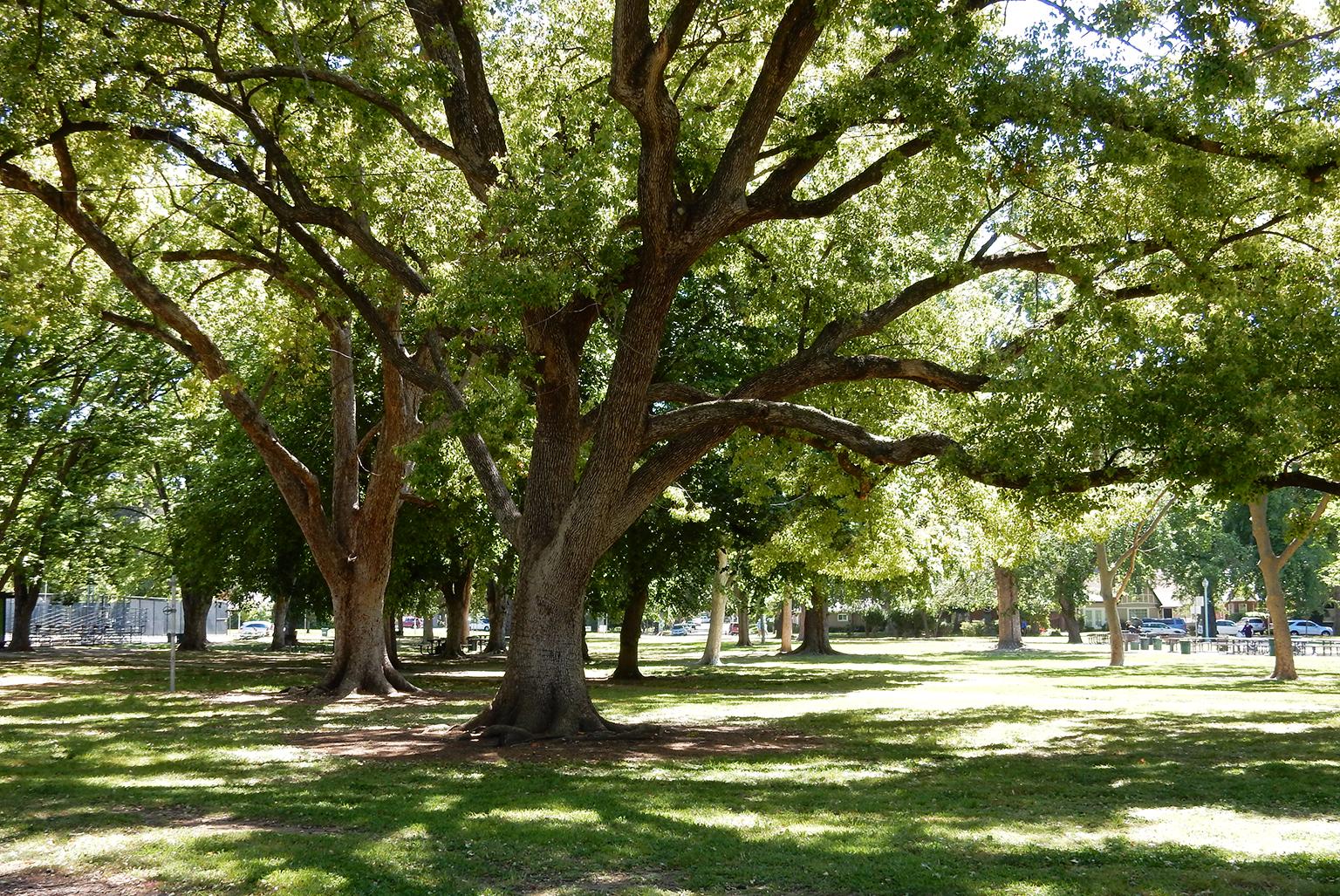 McKinley Park National Register Nomination Cultural Landscape Report