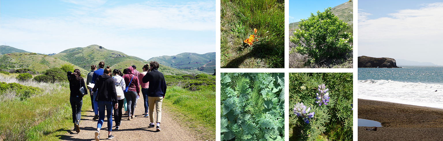 Plant walk in the Marin Headlines