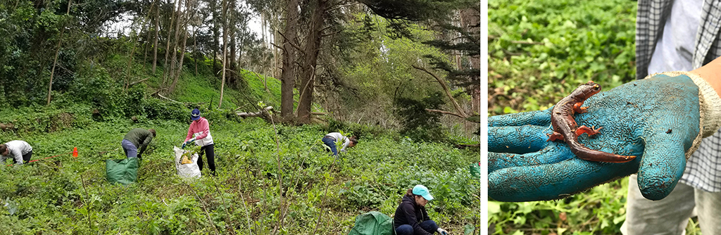 Volunteer Day in the Presidio